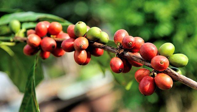 Reunión de articulación para la cosecha de café del segundo semestre