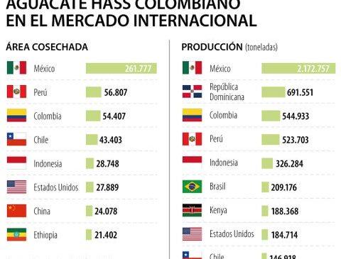 Colombia es tercero en el mundo en producción y área cosechada de aguacate hass