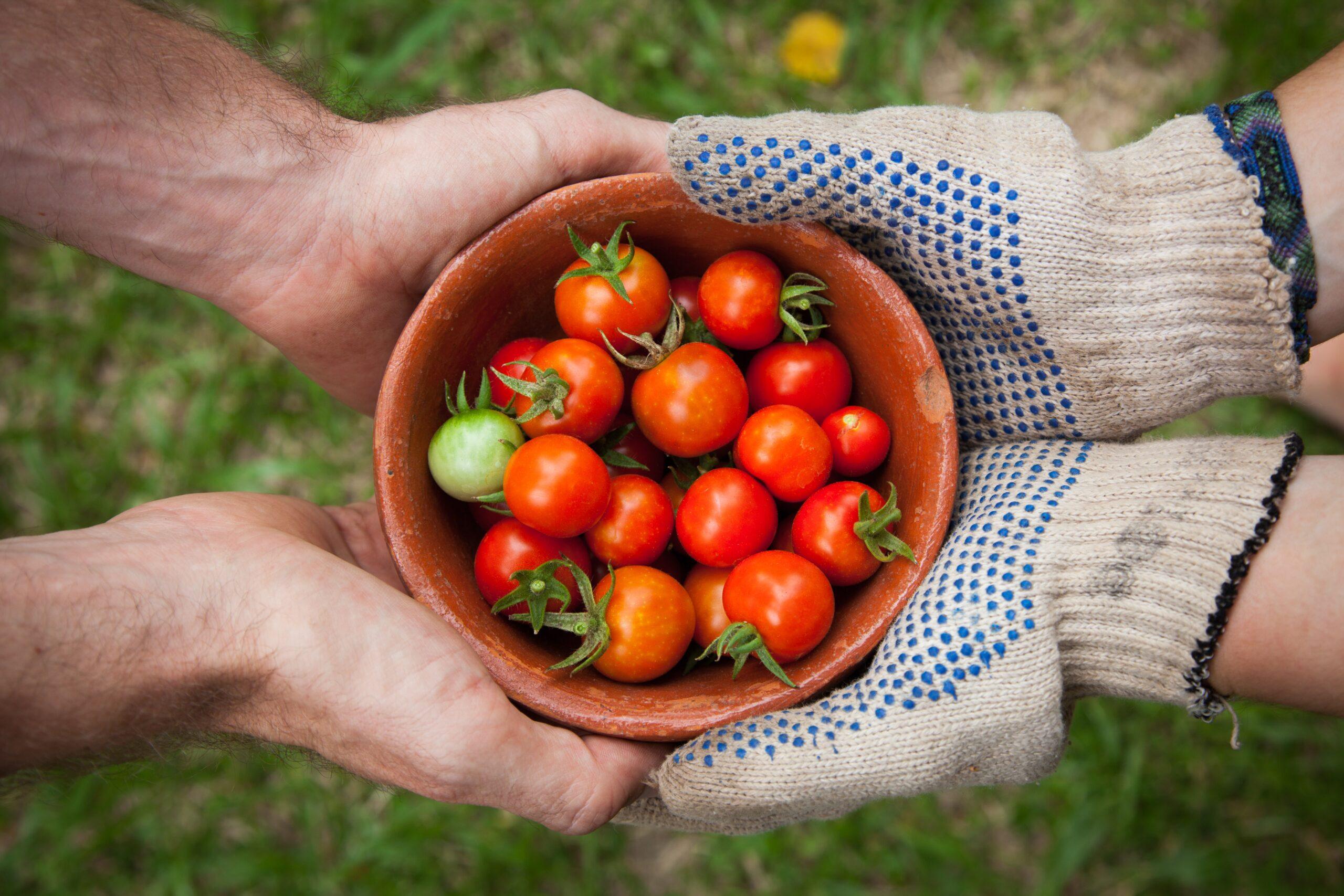 Memorias del ComexTalks: Oportunidades y realidades de reactivación de Colombia mediante la exportación de agroalimentos